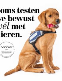 Hulphond Nederland - hannah lanceert een verrassende campagne