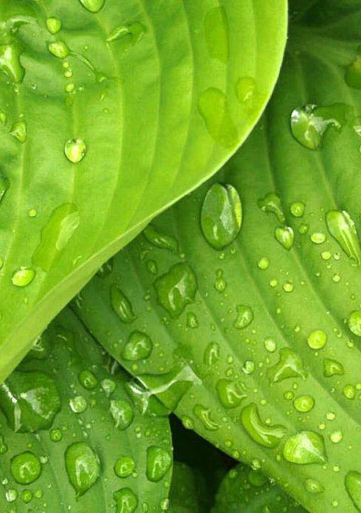Groene conditietrainer voor je huid...